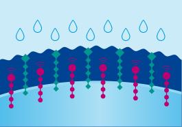 Wasserbindung